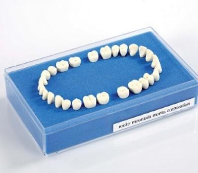 Denti - RMO<SUP>®</SUP> MORITA